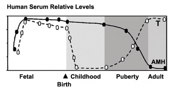 Male testosterone and AMH level graph.jpg